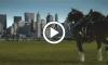 Budweiser 9_11 Commercial
