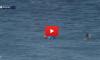 Shark escape