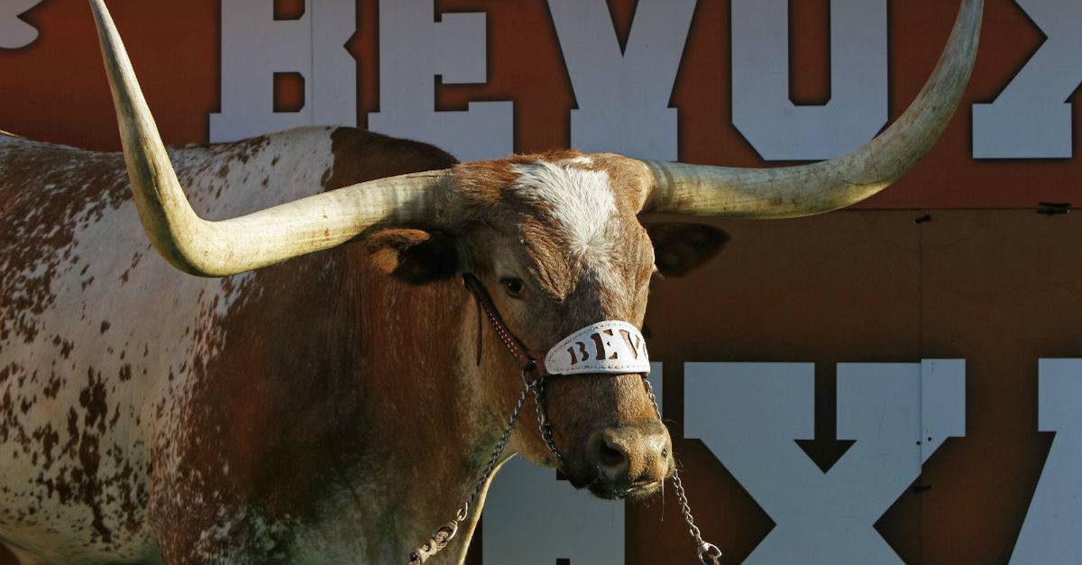 Say it isn't so: The University of Texas' mascot, Bevo XIV, passes away