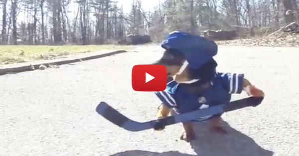Dogs playing hockey is the perfect pick-me-up for any struggling fan