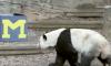 Panda Picks Peach Bowl