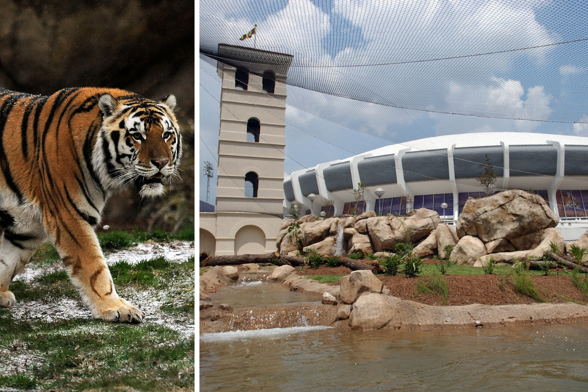 LSU's Mike the Tiger Habitat is a Must-See Attraction in Baton Rouge