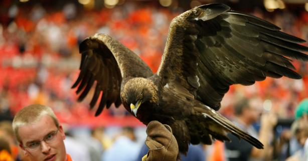 "The 100-Year-Old Legend Behind Auburn's ""War Eagle"""