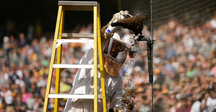 The San Diego Padres Killed a Bunch of Bees, And People are Pissed