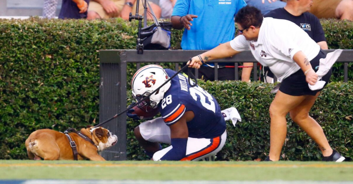 PETA Wants Bulldog Mascot Retired After Collision with Auburn RB