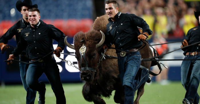Beloved Colorado Mascot Forced to Retire for Being Too Wild