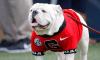 Uga Bulldog Mascot, PETA
