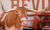 Bevo Texas