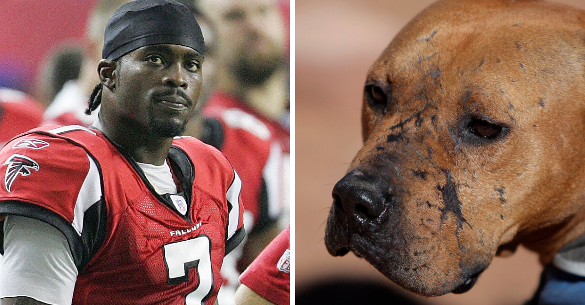 Over 1 Million People Demand Michael Vick's Removal from 2020 Pro Bowl