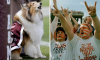 Texas A&M Reveille Kidnapping