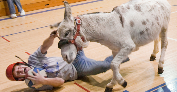 Donkey Basketball: The Cruel Reality of a Historic Fundraiser