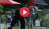 Golf Fart