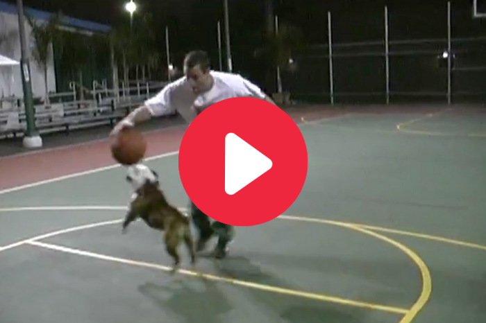 Adam Sandler Playing 1-on-1 Against His Dog Meatball Warms My Heart