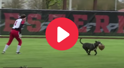 Adorable Dog Escapes on Softball Field to Steal Everyone's Gloves