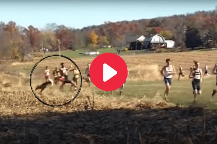 Crossing Deer Levels College Runner During Race