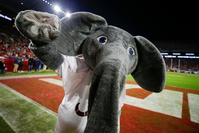 We Spoke With Big Al. Here's What Life is Like as Alabama's Mascot